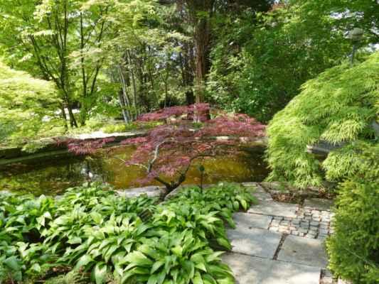 ... nesmím vynechat expozici japonských javorů sklánějících se nad vodní plochou ....