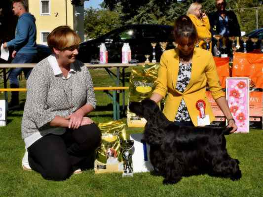 best of black variety male 5 ATHINA'S PRODUCT READY FOR ACTION, MET.MSVK.CSP.0112/16, 01.05.2016 O: GALLINAGOS CAUSE NOTHING COMPARES M: ATHINA'S PRODUCT OBVIOUS STYLE CH: SZAKÁCS GÁBRONÉ RITA MAJ: SZAKÁCS RITA