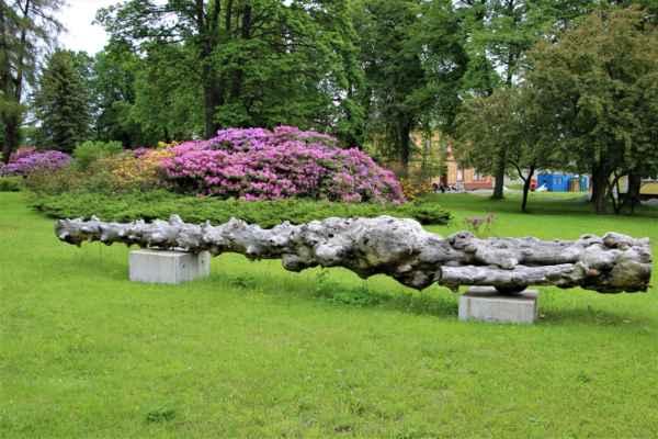 Výsluní - parkové úpravy na náměstí, se mohou pyšnit krásnými, v té době kvetoucími rododendrony