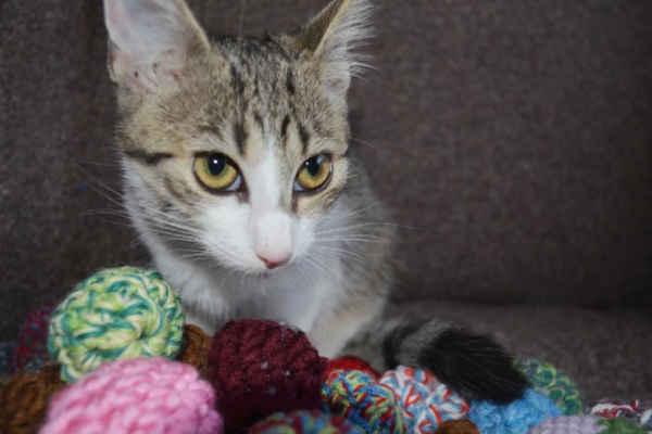 23.9.2020 - Phoebe je milá, hravá kočička, která může do nového domova, kde potřebuje kočičího kamaráda nebo může odejít s některým sourozencem.