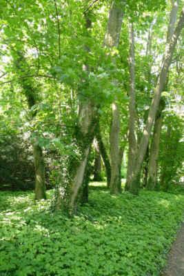 Zámecký park Ploskovice - Park byl založen v 18. století. Jeho koncepce má osové řešení, které se dochovalo dodnes.