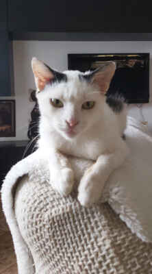 28.9.2021 - Flíček je mazlivý kocourek a veliký jedlík. Je hravý, miluje hračky a mávátka a rád dovádí s kočkami, oblíbil si malou Fifinku a hrávají si spolu. V novém domově je mladý kočičí kamarád podmínkou.