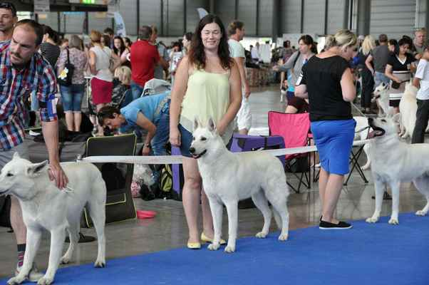 Billy Falco Almost Normal, Brutto Artay of Highland, César Pett´s Wolf - Male Open class