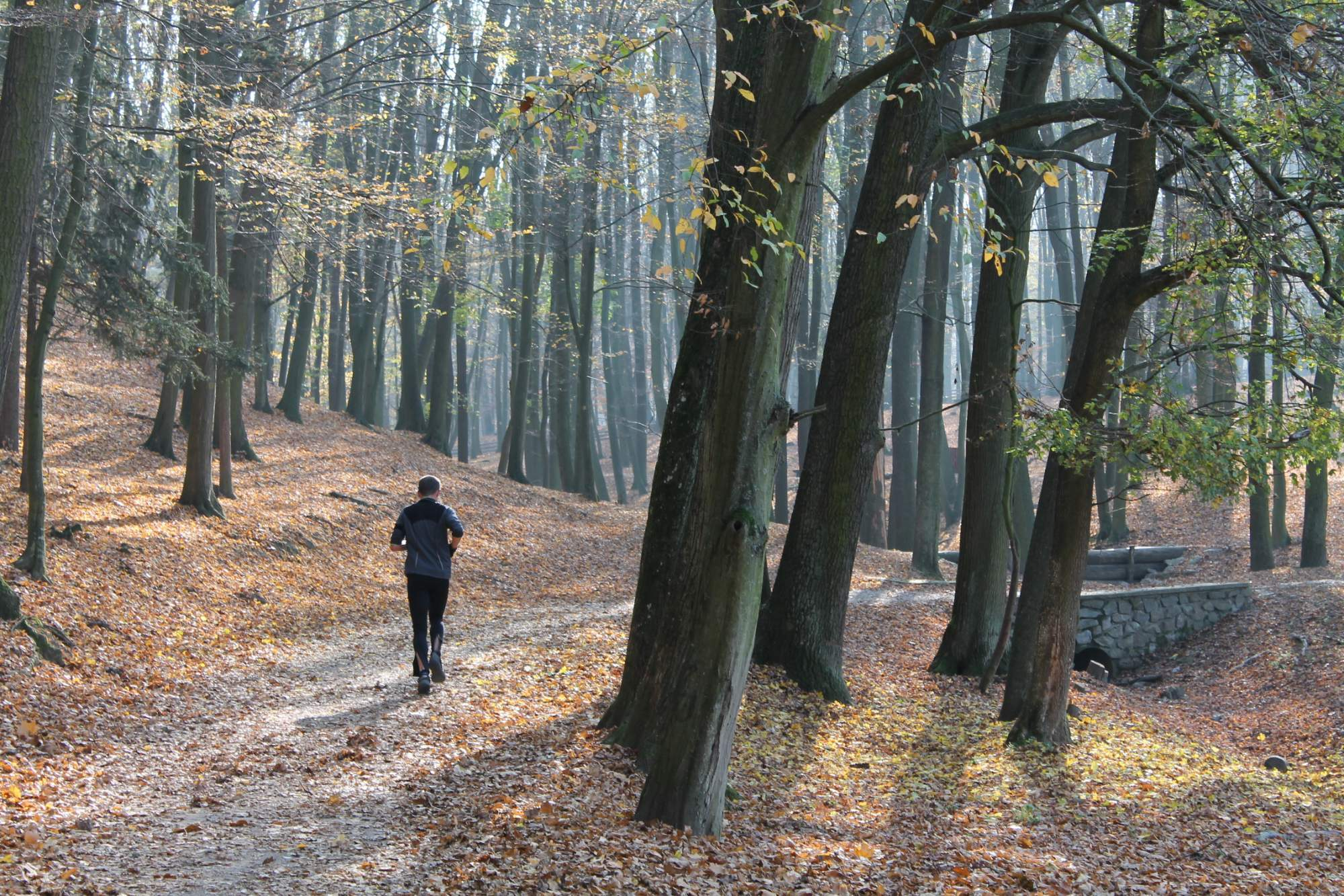 Běžec si užívá podzimní počasí.