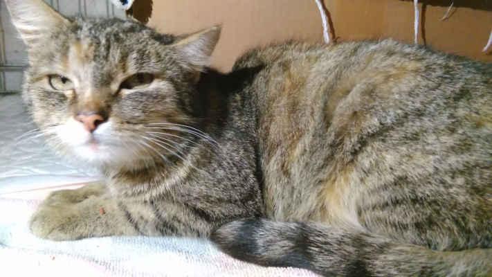 4.5.2020 - Dnes jsme přijali dvě kočky a kotě z Mutěnic. Před několika týdny přivedla kočka na zahradu domu svá tři koťata, paní je na zahradě všechny začala krmit. Po čase se kočka začala ukazovat pouze z jedním kotětem, na zahradě jsou psi, případně je mohli napadnout i kuna nebo kocouři, těžko říct. Kočka dostala jméno Glorie a vzali jsme ji i s kotětem (Evička) k nám.