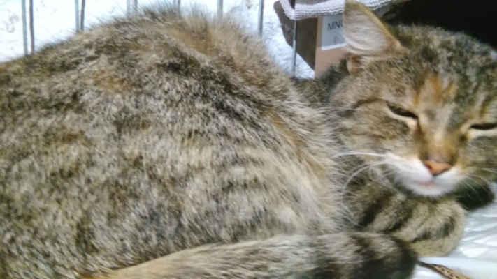 4.5.2020 - Glorie přijatá s kotětem Evičkou ...
