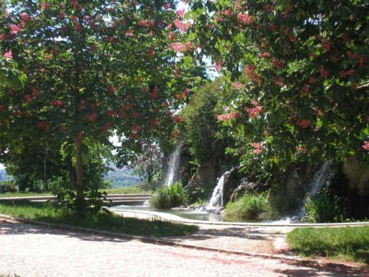 Na Špilberku - - stromy Jírovce červeného nebo-li červeného kaštanu nebo-li koňského kaštanu