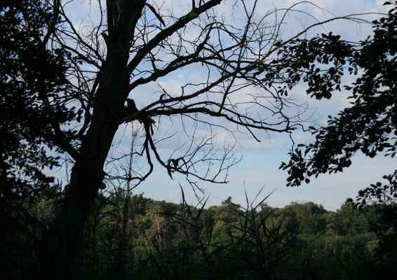 Odcházení - Původně jsem fotila volavku na stromě (:o))...