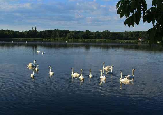 Série Labutí jezero - Toto je na Prostředním rybníku