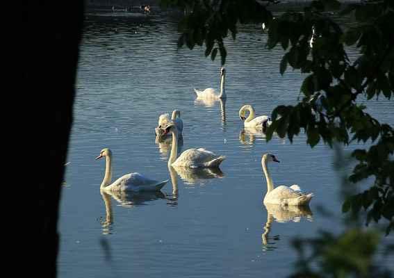 Série Labutí jezero - Poslední ohlédnutí