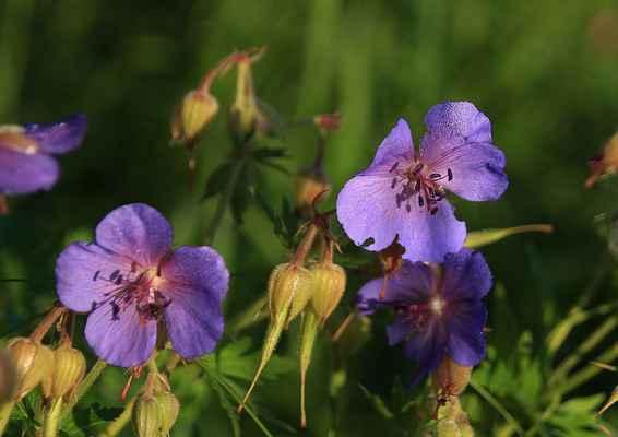 Letni kvetení 4b - Tak čapí nůsek ještě jednou (;o)