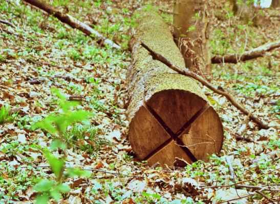 zákaz zastavení na lesní způsob