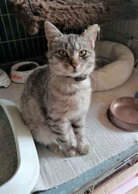 19.5.2021 - Coco je u nás krátce, ale je vidět, že jí pobyt mezi mnoha kočkami nedělá dobře, nechce opustit karanténní klec. Naléhavě jí hledáme domov jako jedináčkovi, v domku se zahradou. K člověku je přítulná, mazlivá. Je vhodná jako JEDINÁČEK, POUZE do domku se zahrádkou. Zavolat nám můžete na 724 142 463.